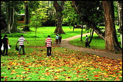 Botanical Gardens of Peradeniya (Mad2PhoFreak) Tags: flowers green garden botanical buddha buddhism sri lanka kandy colombo peradeniya d80 nikond80