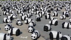 Colors of Grenoble (brigraff) Tags: city blackandwhite animals grenoble noiretblanc exhibition exposition pandas troupeau tz5 panasonictz5 brigraff