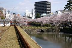 Sakura    (ddsnet) Tags: plant flower japan sony  cherryblossom  sakura nippon odawara  nihon hanami 900  backpackers   flower           kanagawaken   cherry blossom  japan 900    flowerinjapan