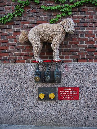 会杂技的平衡狗 - 碌碡画报 - 碌碡画报