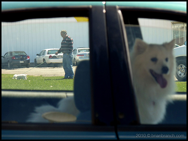 P1090607_2_dogs