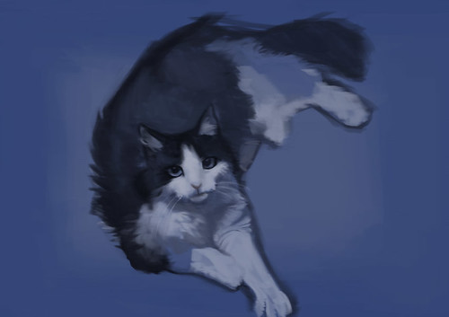 cat-pic2