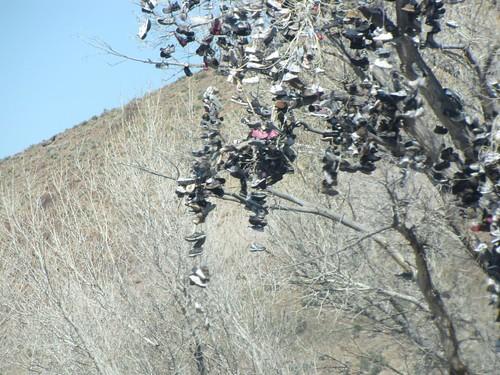 Sneaker Tree-3