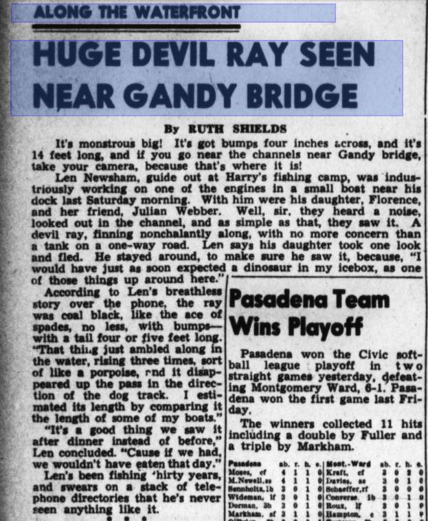 Devil Rays In Bay Area As Early As 1941