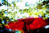 in the full sunlight (moaan) Tags: life light sunlight sunshine digital garden 50mm japanesegarden spring dof shine bright bokeh fine may sunshade clear momiji parasol utata 2010 f095 canonf095 rd1s inlife epsonrd1s canon50mmf095 gettyimagesjapanq1 gettyimagesjapanq2