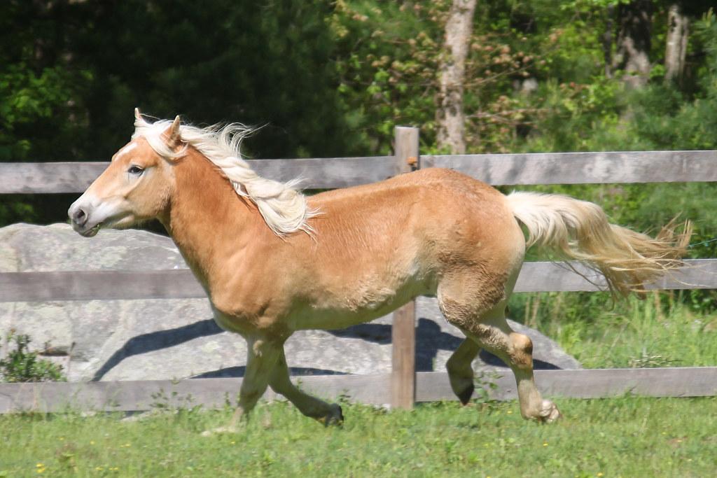 horses 143x