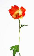 ... Antonin Artaud ... (UBU ) Tags: poetry poesia amicidelluomo ubu unamusicaintesta luciombreepiccolicristalli