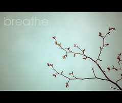 ~ breathe. (CarolynsHope) Tags: blue light sky tree green leaves leaf soft branch pastel branches text minimal simplicity breathe simple kimklassen