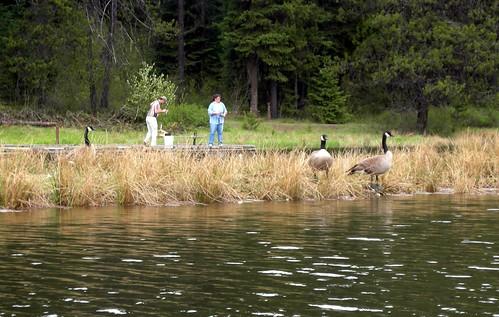 moose creekA1