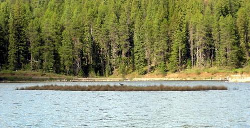 moose creek15