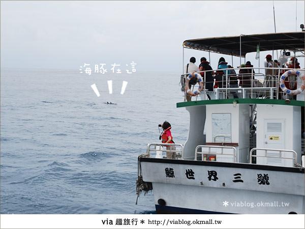 【花蓮賞鯨】花蓮玩樂趣~花蓮賞鯨之旅17