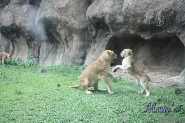 990522台北動物園 140