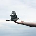 Bird Eating thumbnail