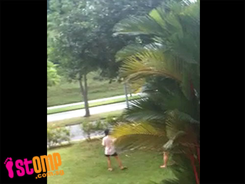 Mango stealers caught knocking the fruit off this tree