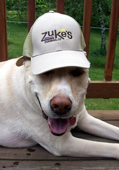 Zukes_Zeus_hat_510b