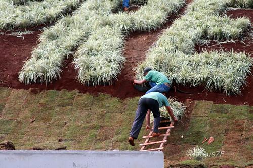 MateusZF 02-06-2010 Stock Car Ribeirao Preto jardineiros preparam o nome da cidade com flores ornamentais