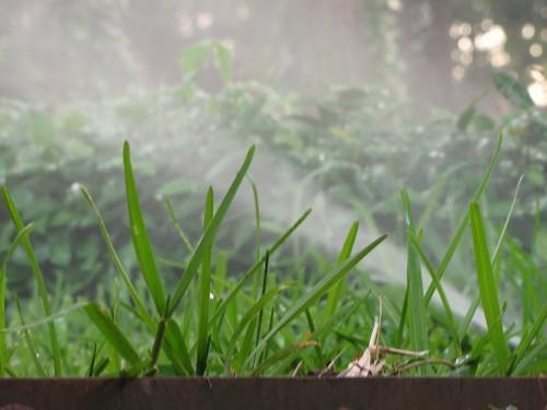 Sprinkler in the Morning 6-3-10