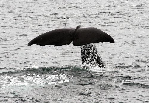 sperm whale, strange ones