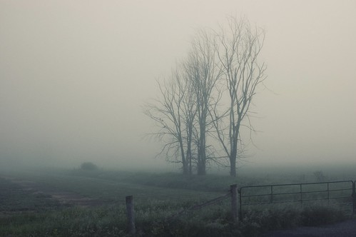 475:1000 Trees in the fog