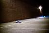 tired (evanbrennan|photo) Tags: 35mm nikon parkinglot dirty sleepy gross tired 18 longday harristeeter improvisedtripod d80 layingdownintheparkinglot whydidilaydownthere