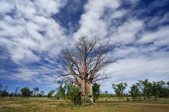 Boab Tree (jr-teams.com - Photo) Tags: tree nature geotagged nikon cloudy australia western inside gps australien nikkor australie 1835 boab d700 pwpartlycloudy