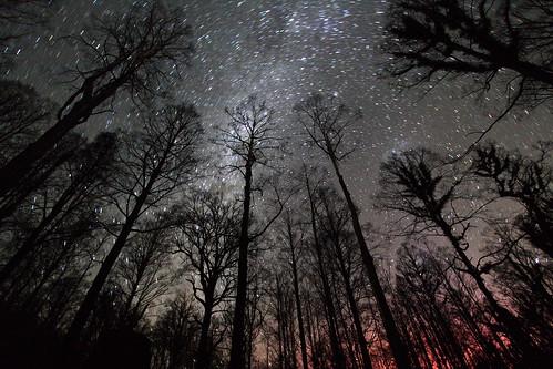 [フリー画像] 自然・風景, 樹木, 森林, 夜空, 201006081900