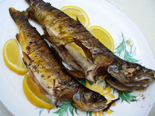 trout5