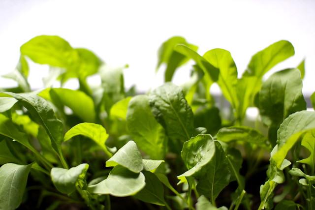 Photo: Rocket Salad