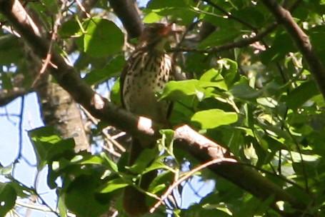 a069 bird