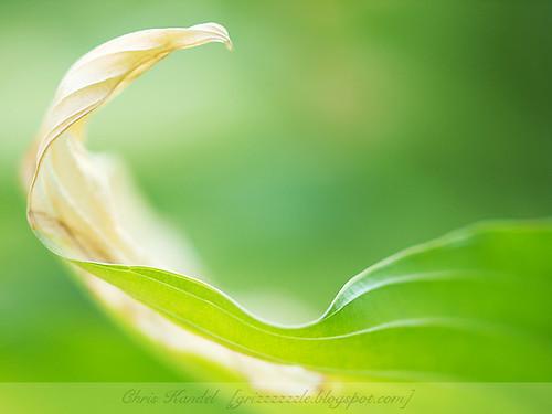 Dreamy Leaf