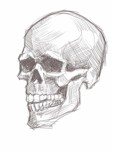 live sketching of skull on iPad -1