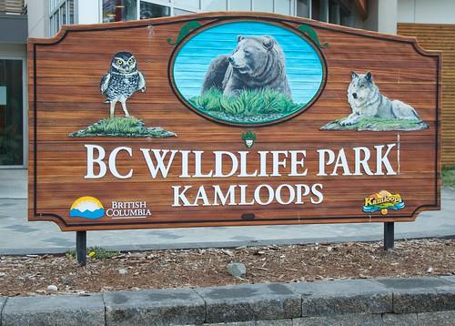 「BC Wildlife Park」的圖片搜尋結果