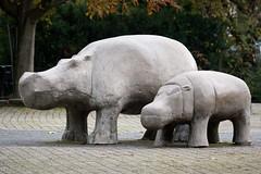 2010-10-29-10h13m10.272P8888 (A.J. Haverkamp) Tags: zoo rotterdam blijdorp misc dierentuin diergaardeblijdorp httpwwwdiergaardeblijdorpnl canonef100400mmf4556lisusmlens