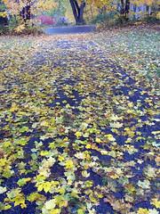 Leaves_102810
