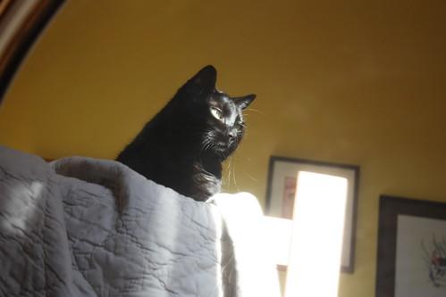 Izzy the Cat thinks I've lost my goddamn mind.
