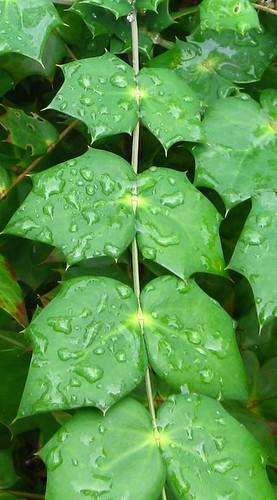 Leave Drops