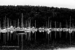West Harbor, Orcas Island (nataliekrovetz) Tags: westsound harbor orcas fujifilm pnw boats sailboat boating orcasisland washingtonstate xt10 reflection bnw blackandwhite monochrome contrast water trees