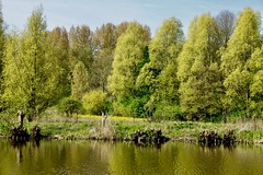 DSC05597 (hofsteej) Tags: middendelfland holland vlaardingervaart netherlands broekpolder april