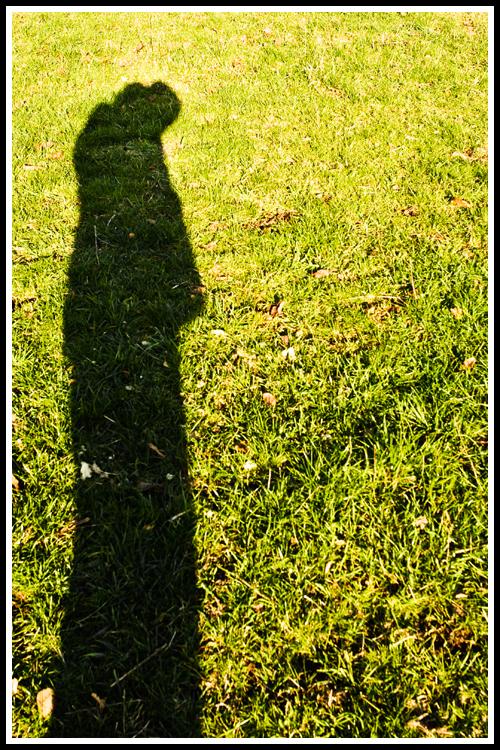lines_shadows