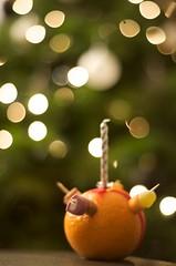 342-365 Christingle ({ Em }) Tags: christmas orange tree advent bokeh christingle