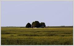 C'est magnifique quand-mme, surtout pendant l't (Sergey Sergejevich) Tags: light green nature landscape serbia vojvodina oldfarm srbija