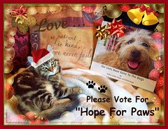 "Please Support ""Hope For Paws""   *** They WON!!! $25K for the Animals!!!  And All of You Who Voted Helped! (FurBabyLuv *Finally back Online) Tags: charity cats pets dogs animals book support homeless contest neglected foster help shelter vote rescued injured abused donate nonprofit eldadhagar hopeforpaws ourliveshavegonetothedogs audreyspilkerhagar chasecommunitygiving"