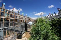 英國永續社區BedZED:工作室單元上方的屋頂花園,可供園藝、食物種植與居民聯誼之用(資料照,謝統勝攝)