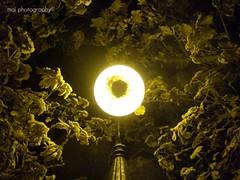 Winter light. (ladeartes) Tags: trees winter light snow luz night arbol nieve invierno 2009 larioja haro