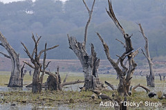 ADS_000007178 (dickysingh) Tags: india landscape scenery outdoor scenic aditya ranthambore singh ranthambhore dicky adityasingh ranthamborebagh theranthambhorebagh wwwranthambhorecom