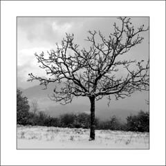 """arbre avec neige (""""berend"""") Tags: bw nature photography fotografie photographie hiver explore neige paysage arbre corrze berend pr cielgris branceilles berenddoornenbal berenddoornenbalphotographie"""