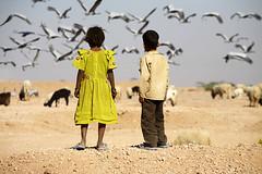 Bikaner, Rajasthan India (Jim Shannon) Tags: tourism children canon5d migration bikaner boyandgirl travelphotography documentaryphotography 70200mmlens rajasthanindia adventurephotography siberiancranes travelanddocumentaryphotography mg84491000px wwwjimshannonnet travelanddocumentaryphotographyfromaroundtheworld