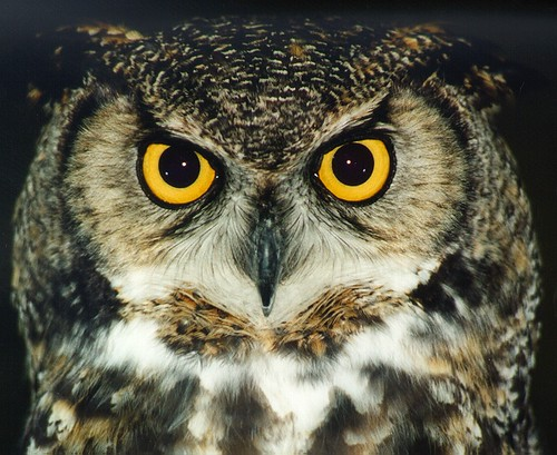 lindsay owl
