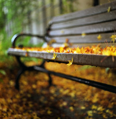 remnants of fall (manyfires) Tags: autumn fall film leaves rain mediumformat bench cityscape hasselblad lakeoswego palabra 500px haseelblad500cm