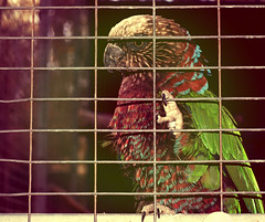eagle head. (Madeleine Schaffner) Tags: bird nature zoo rainbow colorful eagle head wildlife parrot filter gradient